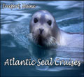 atlantic-seal-cruises